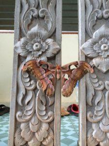 Wildlife at Wat Doi Suthep Vipassana Meditation Center Chiang Mai Thailand