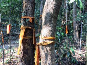 Thailand tree monks - Buddhist forest monks of Vipassana meditation